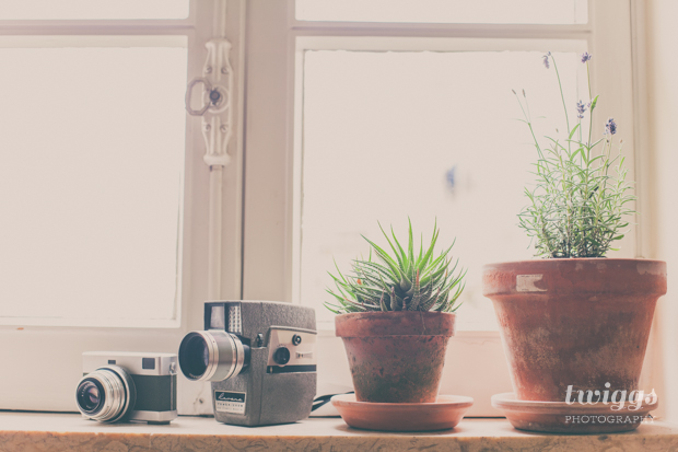 Film Cameras and indoor plants by the window by Twiggs Photography