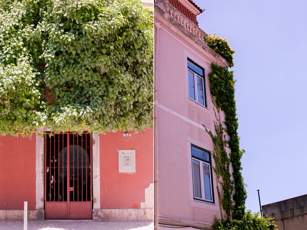 Rua das Janelas Verdes in Lisbon, Tree over door and Ivy over the walls of a house by Twiggs Photography
