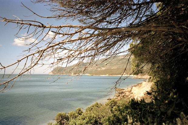 Beach overview through plants and seaside trees by Twiggs Photography