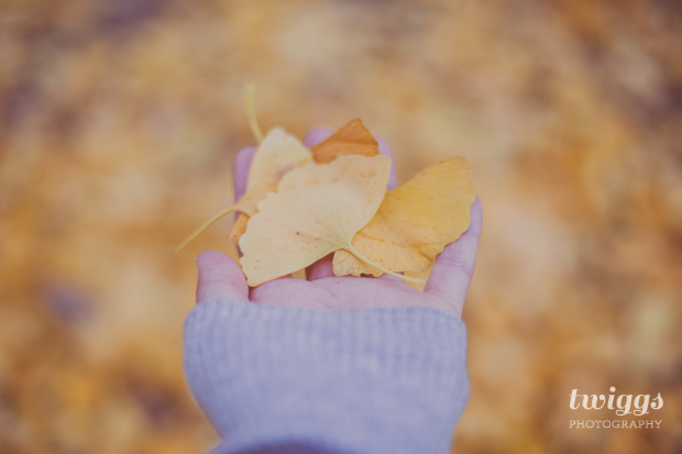 Holding Ginkgo Yellow leaves on the Botanical Garden in Príncipe Real - Lisbon