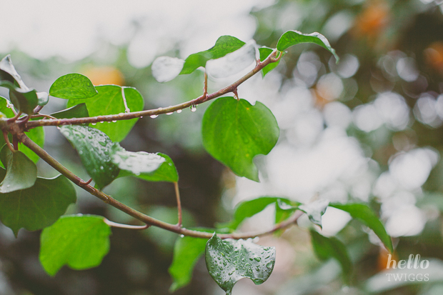 Rain droplets on ivy by Hello Twiggs