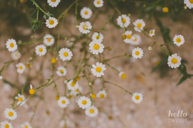 Small daisies by Hello Twiggs