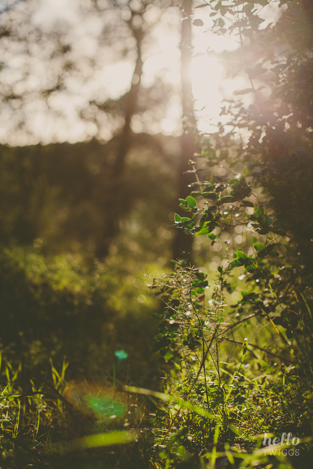 Shadows and Light, Nature Photography // Hello Twiggs