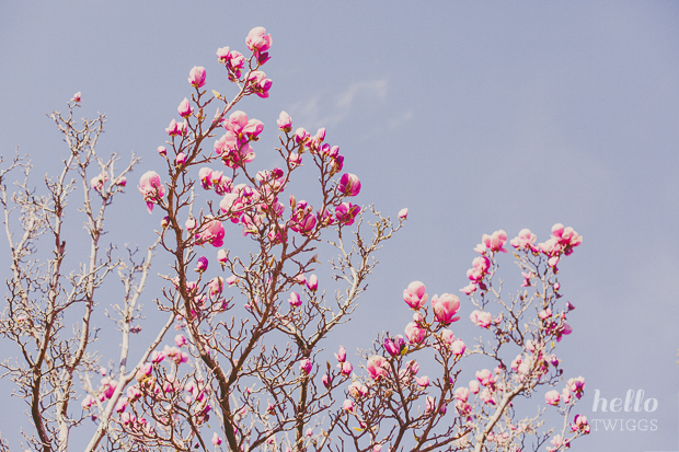 Magnolias blooming in Lisbon by Hello Twiggs