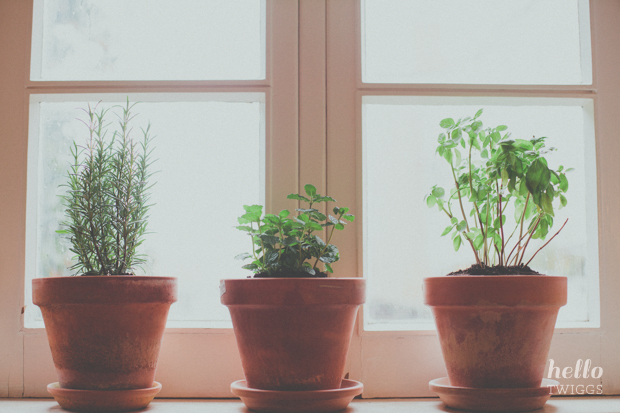 Herbs by the window sill during rainy day