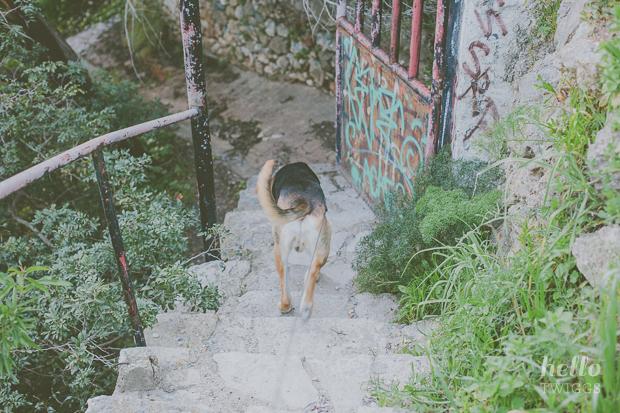 Mr Kobe exploring a path