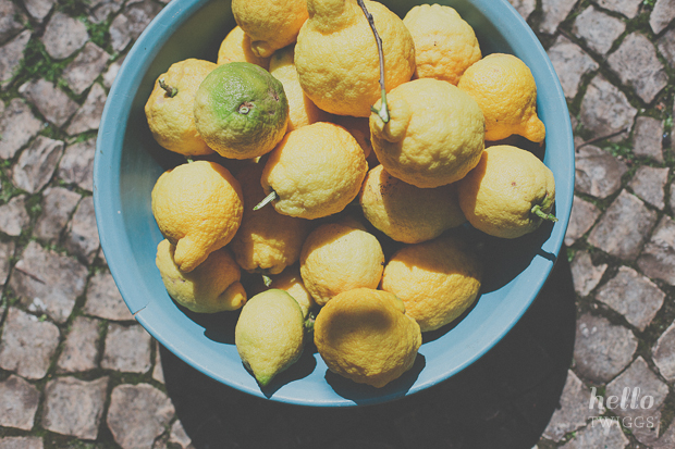 Freshly picked lemons