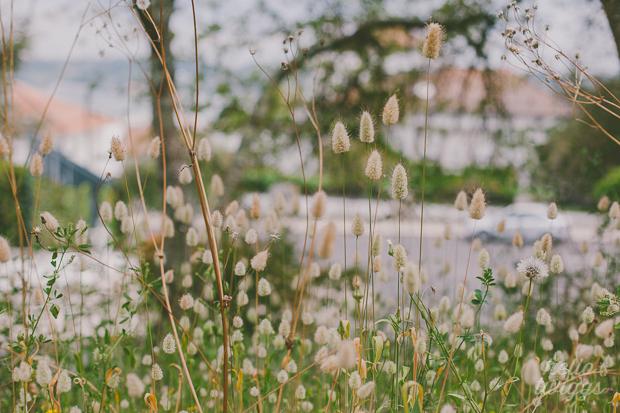 simple things :: flores da rua