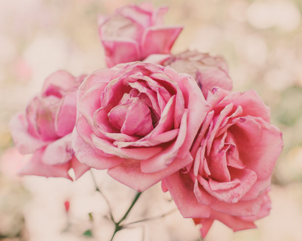 shop :: cor-de-rosa