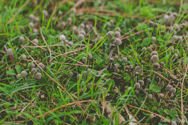Mushroom Photograph
