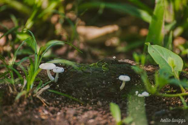 Fungi Photography in the Woods