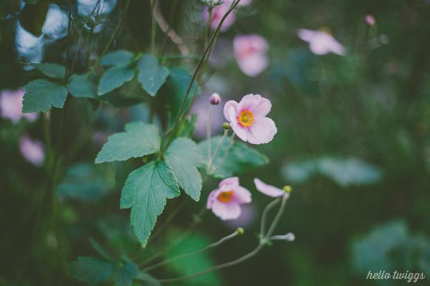 Fotografias de Natureza por/Nature Photography by Claudia Casal // Hello Twiggs