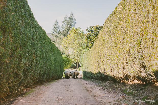 Quintas de Casamento de Charme, Quinta de Sant'Ana - Mafra, Fotografias por Claudia Casal // Hello Twiggs (30)