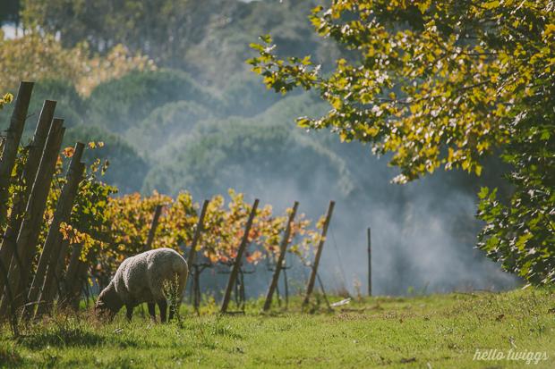 Quintas de Casamento de Charme, Quinta de Sant'Ana - Mafra, Fotografias por Claudia Casal // Hello Twiggs (9)