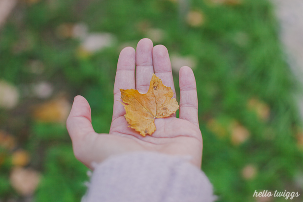 Fall in our Backyard - Photos by Claudia Casal // Hello Twiggs