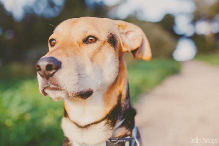Mr. Kobe - Street Dog