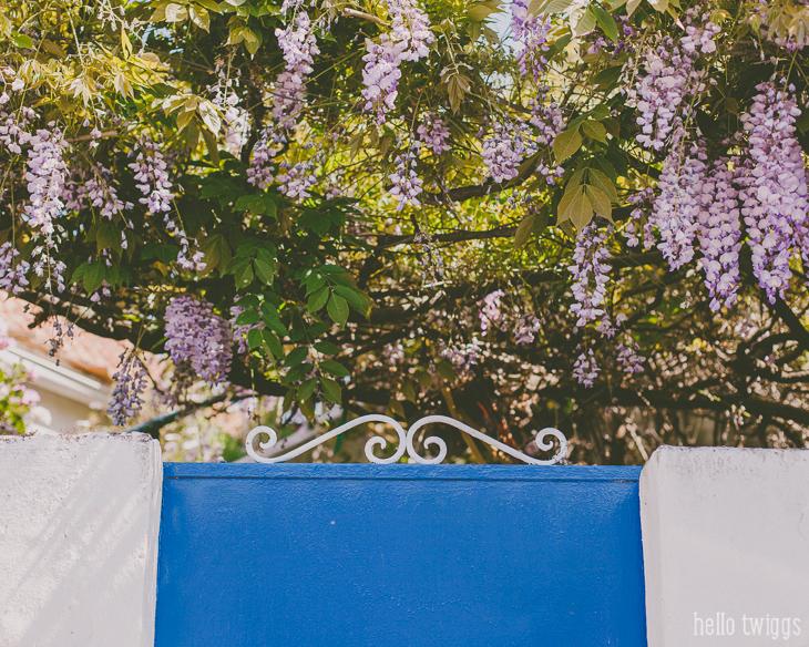 Portão Azul e Flores