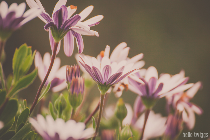 Pink Daisies Fine Art Print by Claudia Casal // Hello Twiggs
