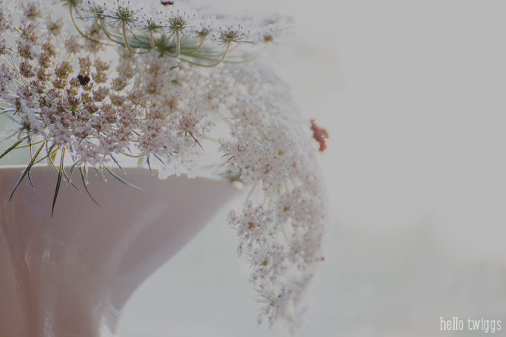 simple things :: queen anne's lace