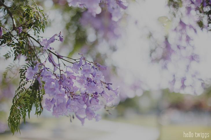 Jacaranda Tree by Claudia Casal * Hello Twiggs