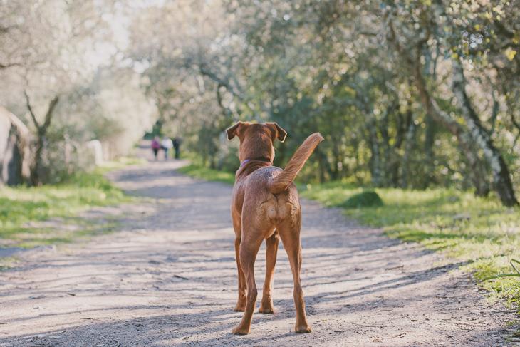 JH 080314 11 my pet :: joana + hope